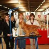 Sur le podium : Réserve Best In Show